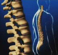 Backaches Wellness Training Video